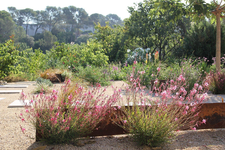 pantes pour jardin sec méditerrannéen
