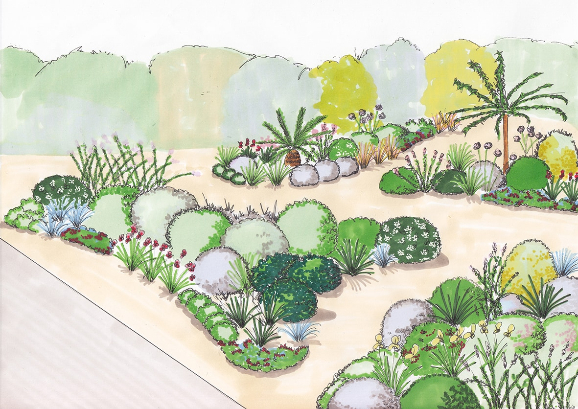 croquis jardin sec mediterraneen