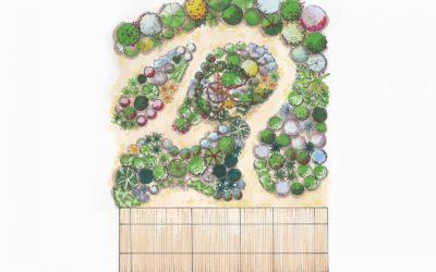 Créer un jardin sec insolite